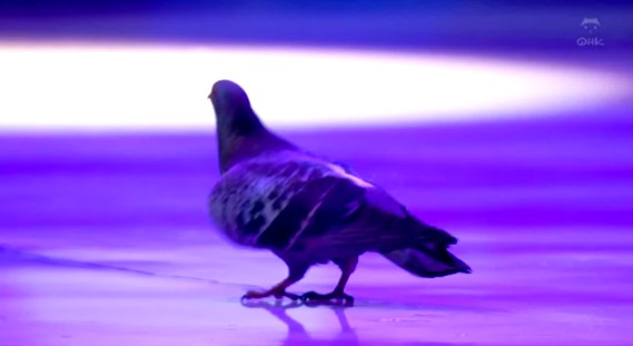 2012world_hato.jpg